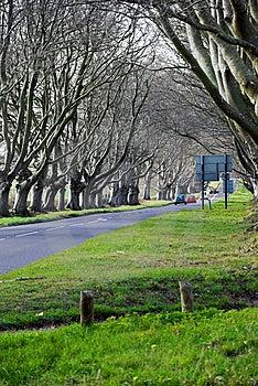 Avenue Of Trees Stock Photos - Image: 9036233