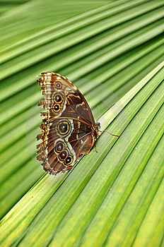 Butterfly On Striped Plant Royalty Free Stock Photos - Image: 9036538