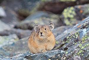 Hamster Close Portreit Stock Photo - Image: 9036870