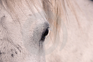 Eye Of The White Horse Royalty Free Stock Photography - Image: 9038007