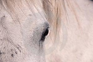 Eye Of The White Horse Royalty Free Stock Photography - Image: 9038007