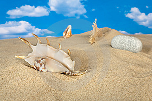 Landscape With Seashell And Stones On Sky Stock Photography - Image: 9039812