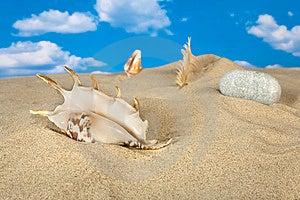 Paisagem Com Concha Do Mar E Pedras No Céu Fotografia de Stock - Imagem: 9039812