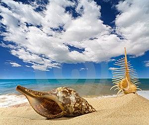 Paisagem Com A Concha Do Mar No Céu Fotos de Stock Royalty Free - Imagem: 9039818
