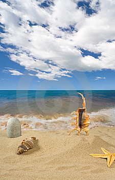 Landschap Met Zeeschelp En Stenen Op Achtergrond Royalty-vrije Stock Foto - Afbeelding: 9039835
