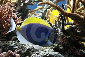 Tropical Fish Royalty Free Stock Photos - Image: 9041698