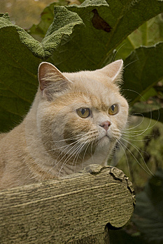 Cat In The Garden Stock Images - Image: 9044924