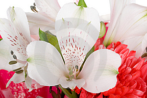 Close-up Wedding Bouquet Royalty Free Stock Photo - Image: 9050005