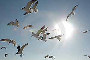 Sea Gulls In The Sun Royalty Free Stock Photos - Image: 9052538