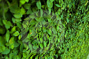 Leaf On Wall Royalty Free Stock Image - Image: 9052626