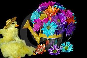 Daisy Ducks Royalty Free Stock Photography - Image: 9053827