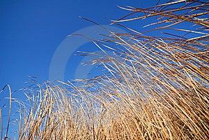 Cane Stock Image - Image: 9056211