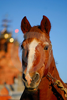 Horse Stock Photography - Image: 9056232