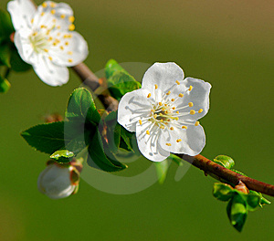 Flower Royalty Free Stock Photos - Image: 9056248