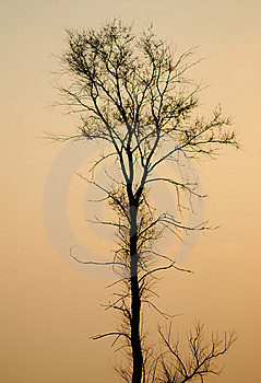 Tree Royalty Free Stock Images - Image: 9056389