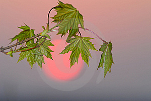 Foliage And  Sun Stock Image - Image: 9056461