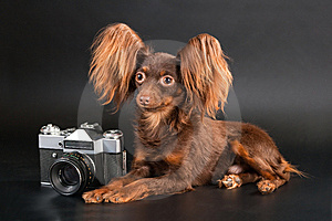 Pedigree Dog And Outbred Camera. Stock Photography - Image: 9059052