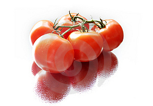 Tomatoes Free Stock Image
