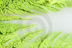 Close-up Of Cabbage Leaf Royalty Free Stock Photos - Image: 9062438