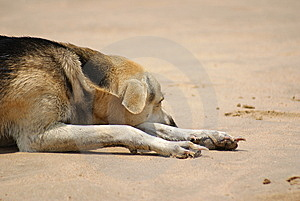 Lazy Dog On Beach Stock Image - Image: 9062681