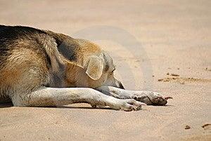 Perro Perezoso En La Playa Imagen de archivo - Imagen: 9062681
