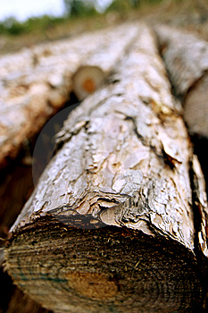 Lumber - Fallen Tree Royalty Free Stock Photo - Image: 9072035