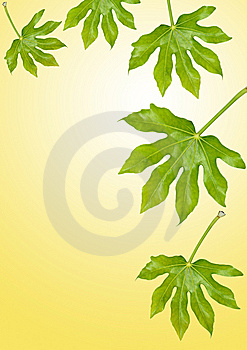 Fig Leaves Stock Photo - Image: 9072170