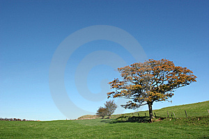 Oak Tree In Autumn Stock Image - Image: 9072351