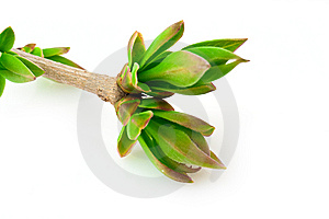 Spring Branch Stock Images - Image: 9078904
