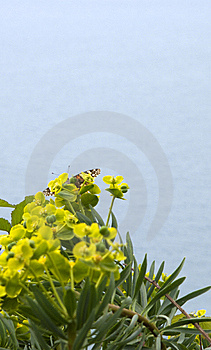 Yellow Flower Royalty Free Stock Photos - Image: 9078938