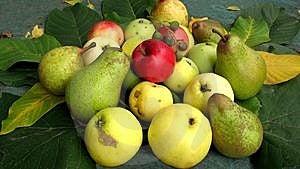 Fruit-piece Royalty Free Stock Photography - Image: 9079437