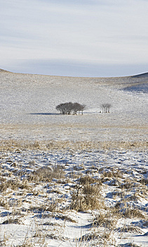 Trees On Snow Stock Image - Image: 9082661