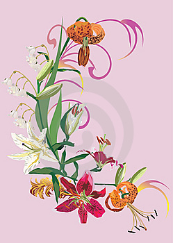 Decoration Of Different Lily Royalty Free Stock Photography - Image: 9084837