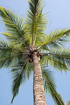 Palm Stock Photography - Image: 9085002