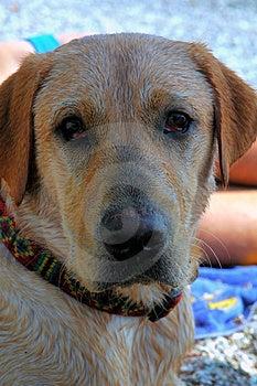 Cane In Ombra Fotografia Stock - Immagine: 912402