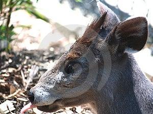 Олени Japaneese Стоковая Фотография RF - изображение: 913177