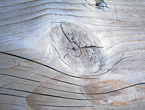 Tree Plank Stock Photos - Image: 916053