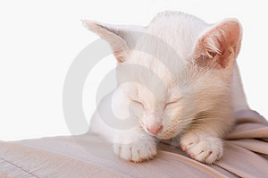 Cat photo - Angelic sleep 3 Royalty Free Stock Photography