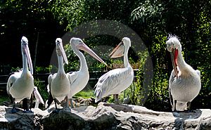 Pelican Paradise Royalty Free Stock Photos - Image: 9212998