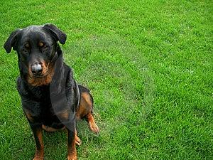 Cute Dog Royalty Free Stock Photo - Image: 9217715
