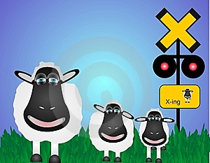 Sheep Crossing Royalty Free Stock Images - Image: 9222289