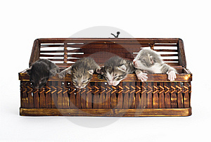 Blind Kittens In The Basket. Stock Photo - Image: 9222870