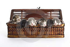 Blind Kittens In The Basket. Royalty Free Stock Images - Image: 9222879