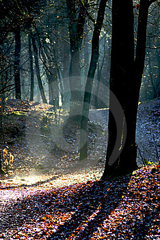 Ray Of Light Stock Photography - Image: 9225582