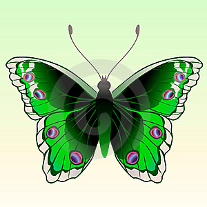 Butterfly Royalty Free Stock Photos - Image: 9226438
