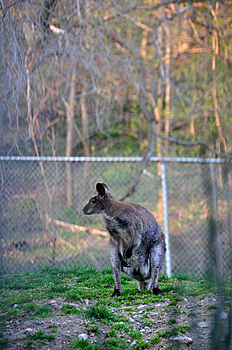 Kangaroo Stock Photography - Image: 9228652