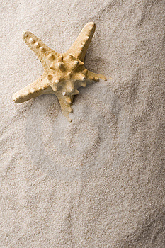 Shell On Sand Stock Images - Image: 9237534