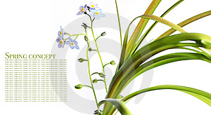 Flora Against White Background Royalty Free Stock Images - Image: 9244229