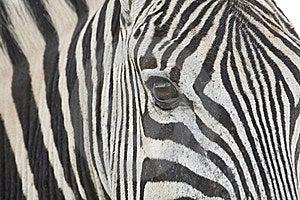 Closeup Of Zebra Stock Images - Image: 9249674