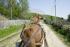 Horse On Country Road Royalty Free Stock Images - Image: 9250299